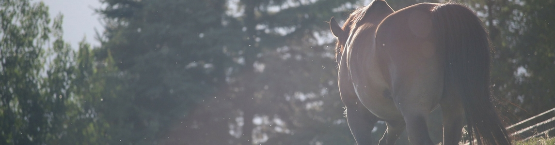 Equestrian in Gisborne